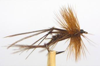 Brown hopper
