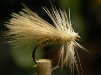 sedge CDC 1 (gris clair)